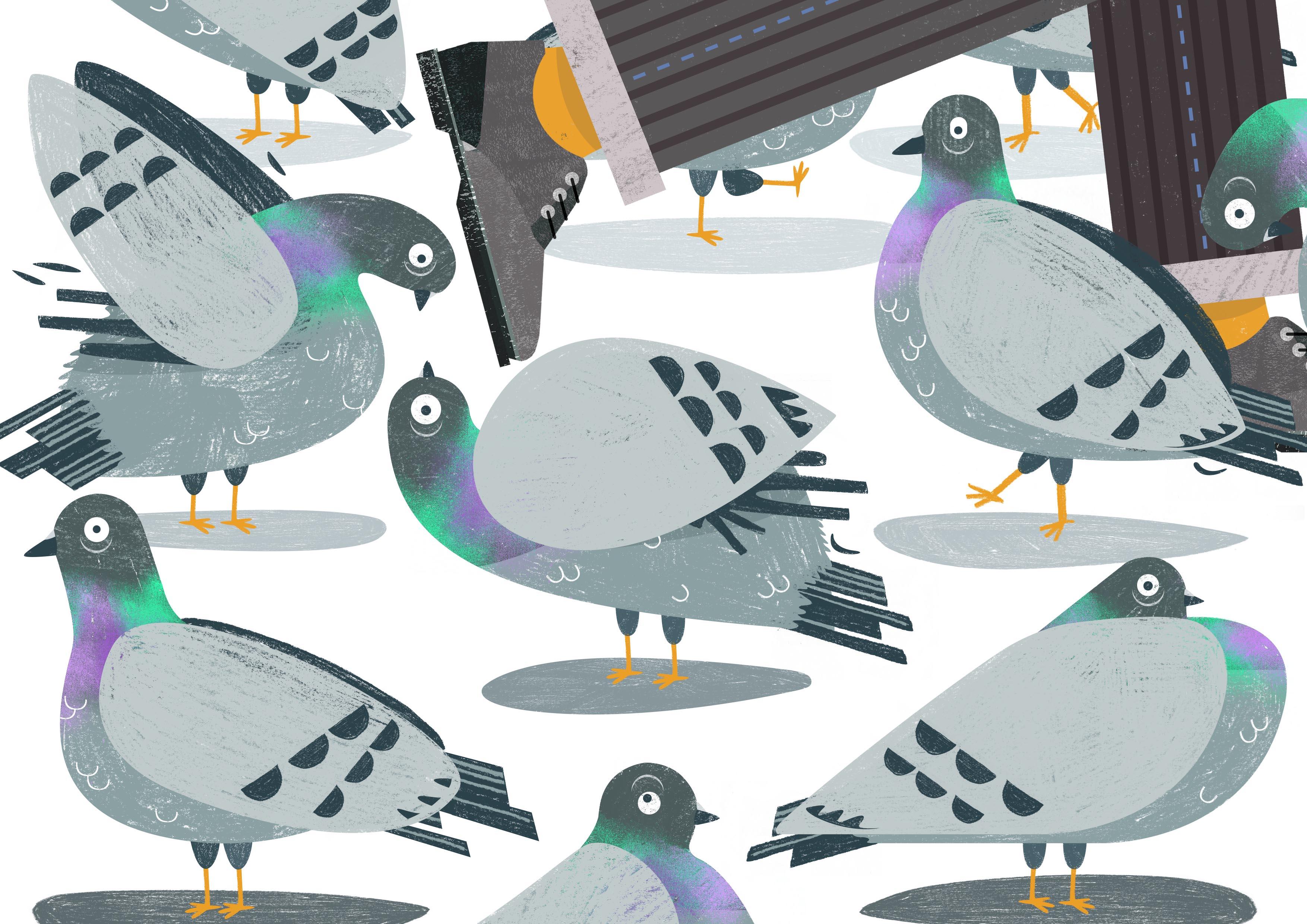Pigeon-lr