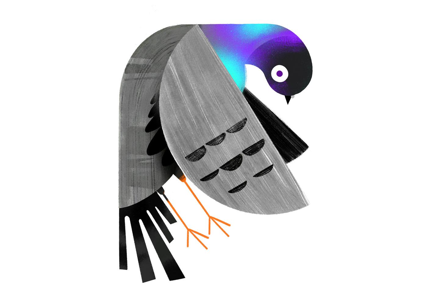 pigeon_main1